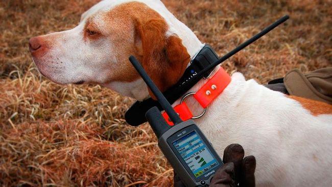 Ошейник Для Собак С Навигатором. Хорошая Идея Для Прибыльного Бизнеса